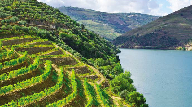 Cruzeiro no Douro: Porto » Régua - Peq.Almoço, Almoço, Visita a Quinta e Degustação de Vinhos