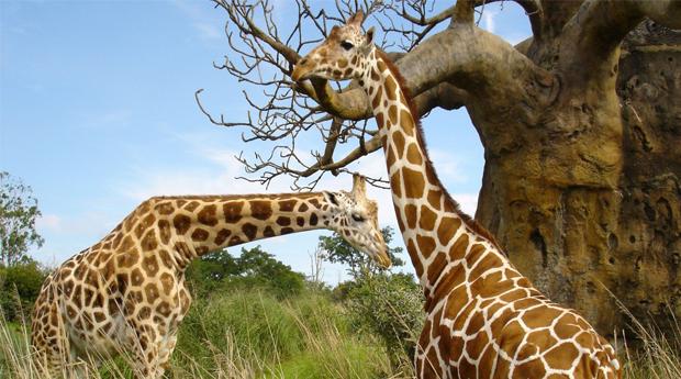 Alentejo com Entradas no Badoca Safari Parque -  2 Noites para 2 Adultos e 1 Criança no Refúgio das Origens!