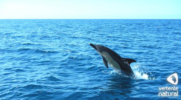 Passeio de Barco com Observação de Golfinhos na Costa da Serra da Arrábida!