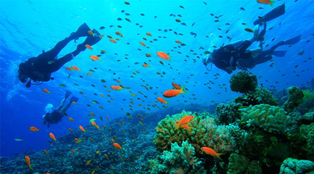 Experiência a 2 com Mergulho e Passeio de Barco em Sesimbra!