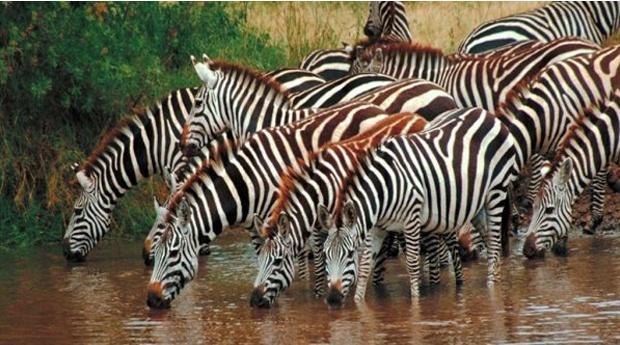Badoca Safari Park e Hotel 3* - Até 7 noites no Hotel Rural Monte da Leziria 3* com Entradas no Parque!