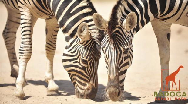 Alentejo, Badoca Safari Park - 1, 2 ou 3 Noites no Monte da Leziria com  Entradas no Safari Park!