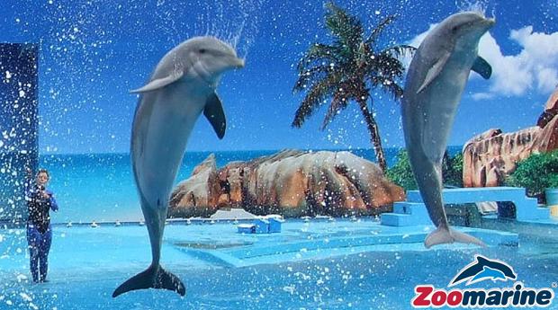 Zoomarine Verão -  Bilhetes mais 2,3 ou 5 Noites p/ 3 ou 4 Pessoas no Acqua Maris Balaia!