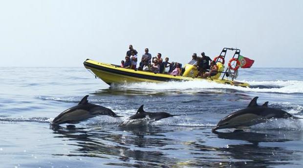 Cruzeiro na Costa Algarvia com Observação de Golfinhos e Passagem Pelas Grutas com Fotografias!
