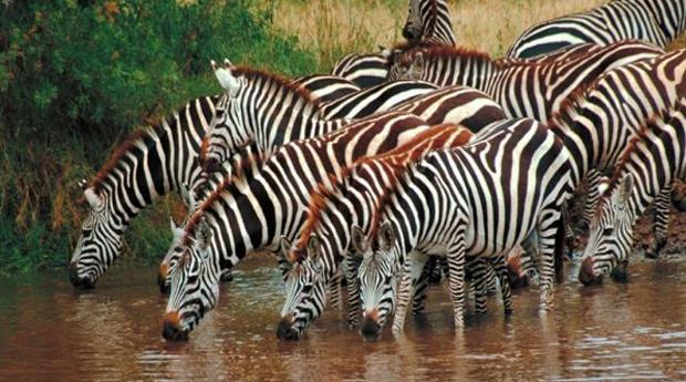 Litoral Alentejano - 1 ou 2 Noites no Hotel Rural Monte da Leziria com  Entradas no Badoca Safari Park!